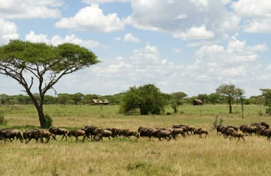 Kennismakingsreis met Tanzania