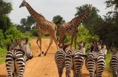 Privé Safari door Zuid-Tanzania