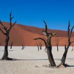 Namibië Deadvlei